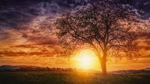 Sunset Nature Trees Wallpaper - NuWallpaper HD
