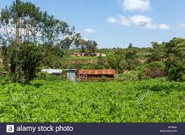 Colour landscape photograph of sparse makeshift homes amongst lush  vegetation and crops, taken in Kangaita village, Meru county, Kenya Stock  Photo - Alamy